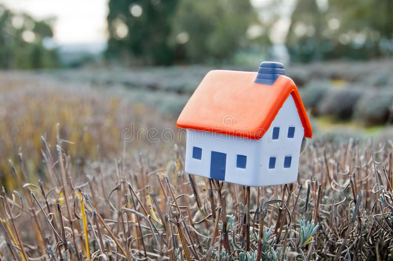 Small soft miniature toy house placed on lavender branch in farm in France stock photo
