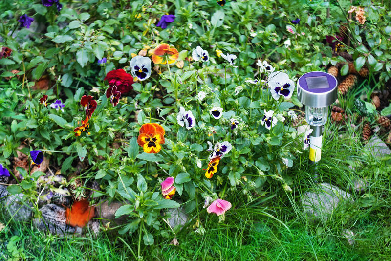 Small solar garden light with pansy flowers royalty free stock image