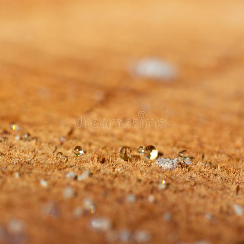 Small spheres of resin coming out of the cut trunk of a pine tree royalty free stock photos