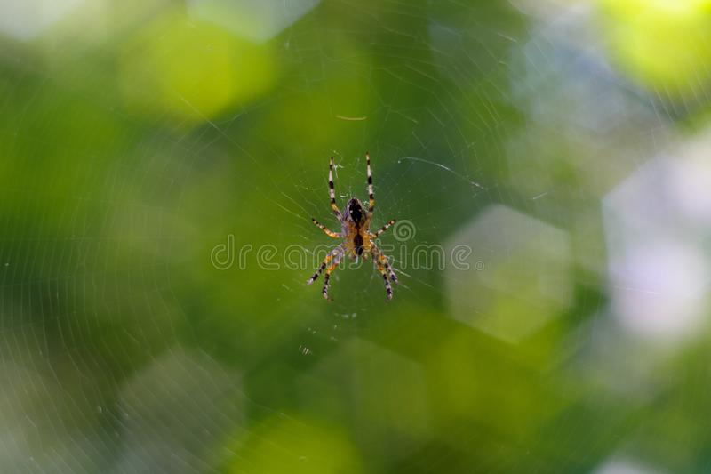 Small spider handing in spiderweb. On background curly green bokeh stock photography