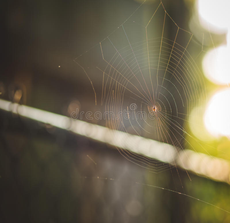 Small spider in its web. Little, small, arachnid, constructing, elaborate, still, spiral, incomplete, in progress, unfinished, spun, spin, spinning, large spider royalty free stock photo