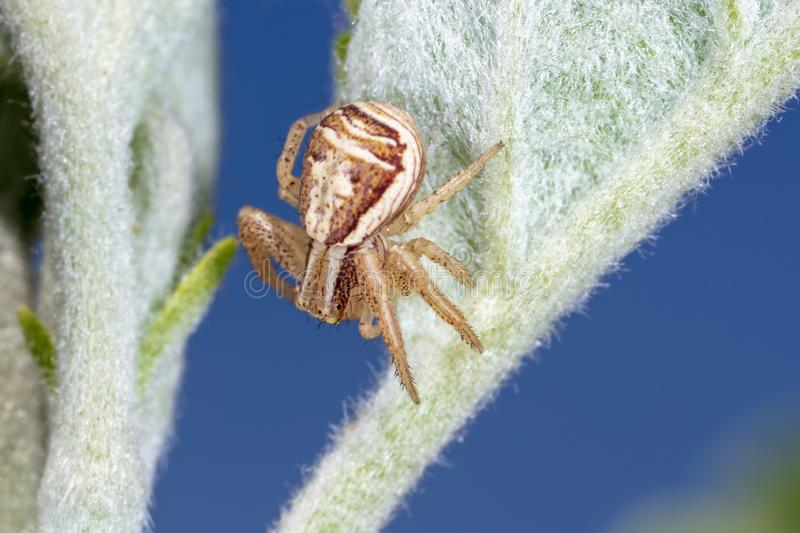 A small spider on the plant royalty free stock photography