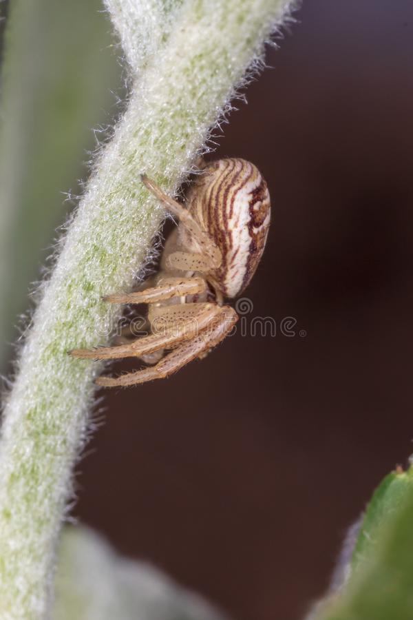 A small spider on the plant stock photography