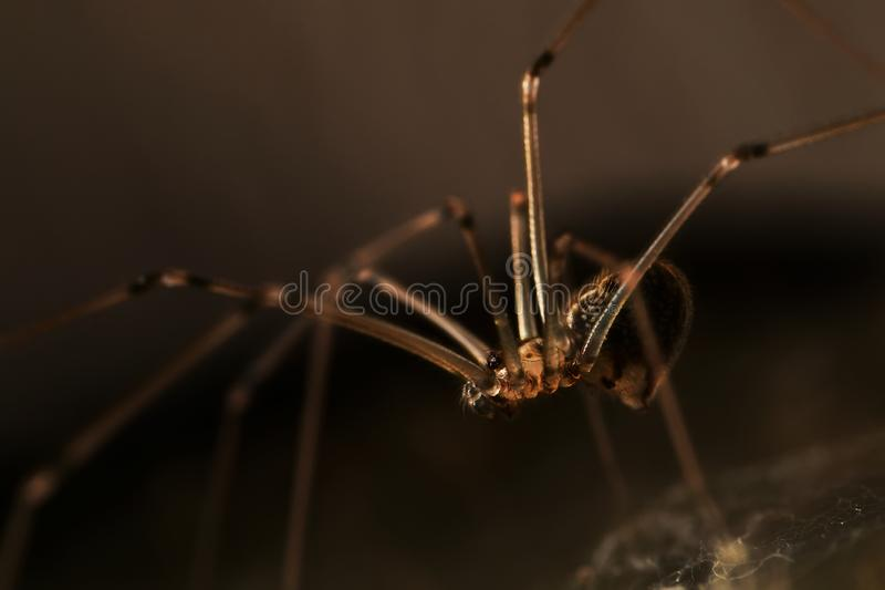 Small spider in the corner. Small spider trappings in the narrow corner stock photo