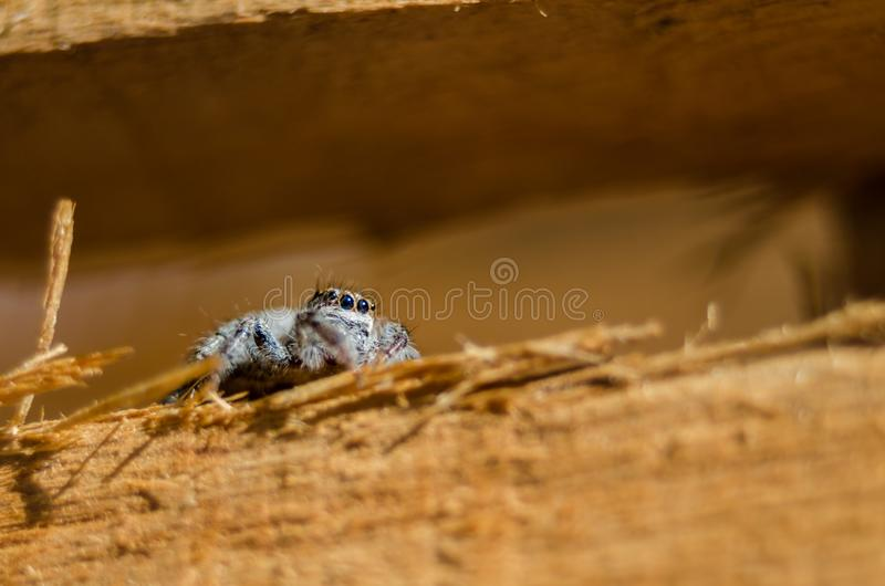 Small spider on wood - close up stock photography
