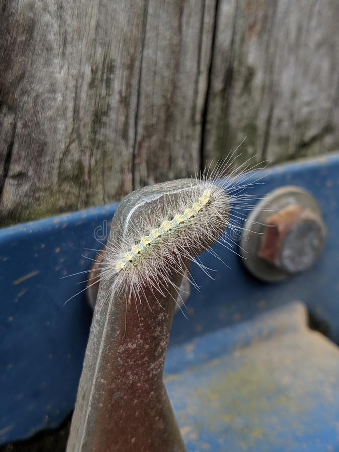 Small spikey Caterpillar stock photography