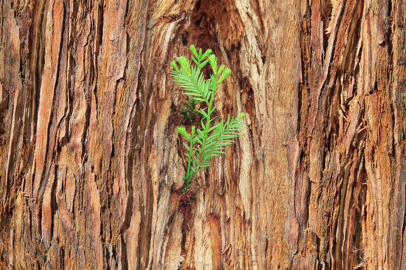 Small sprout on old tree, symbolizing new life, new project or n. Concept, symbolizing new life, new project, new initiative stock images