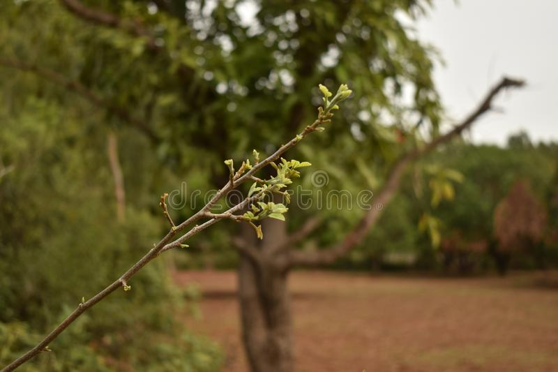 SMALL STEM HAVING FRESH GREEN LEAVES royalty free stock photography