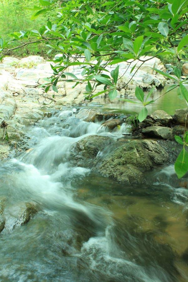 Free Small Stream Royalty Free Stock Photos - 15838358
