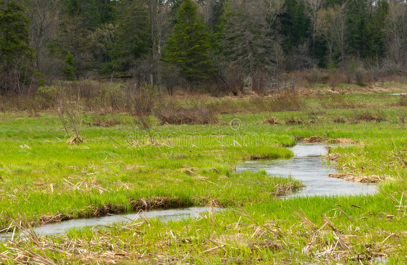 Small stream on a meadow. Spring stream through a meadow in spring royalty free stock photo