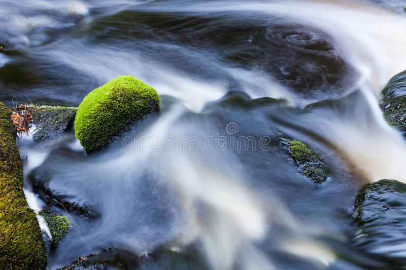 Small stream in mixed forest. Finland nature stock images