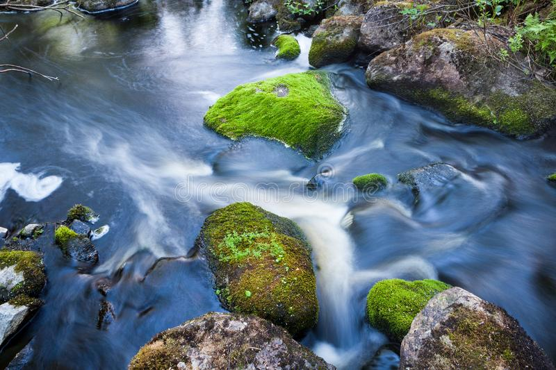 Small stream in mixed forest. Finland nature stock image