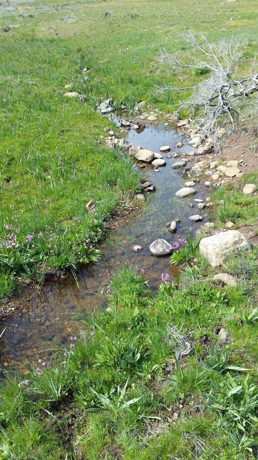 Small stream stock photography