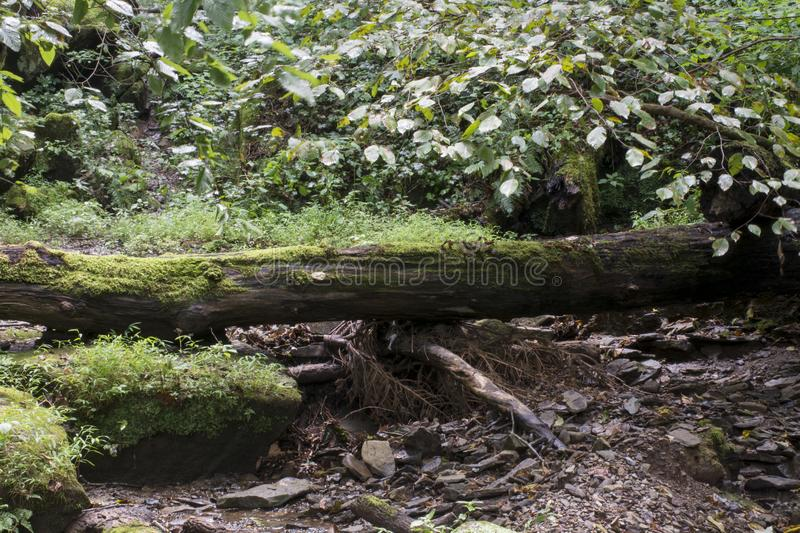 Fallen tree and small stream royalty free stock photo