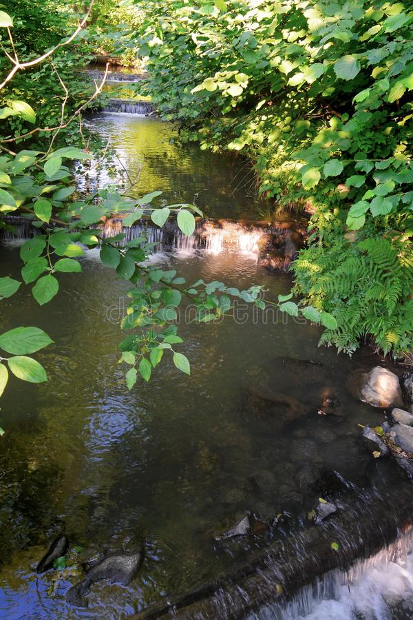 A small stream running between thick bushes is being downloaded by small waterfalls through logs imposed across the. Stream. . For your design royalty free stock photo