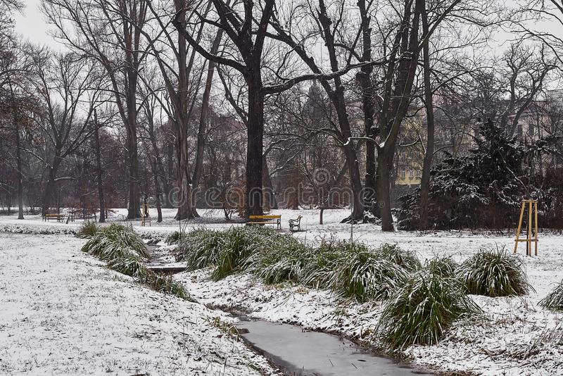 Small stream and snow-covered tufts of grass, lawn and trees in city park in foggy morning. royalty free stock photos