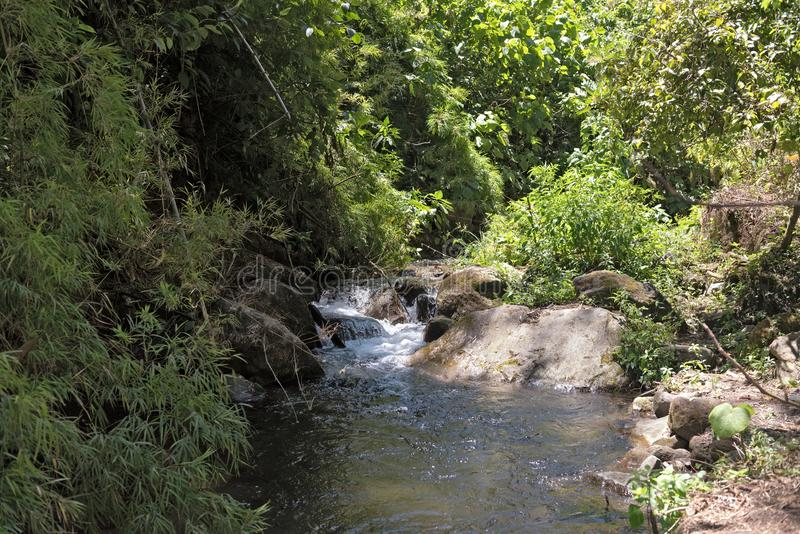 Small stream in Volcan Baru National Park Panama.  stock photography