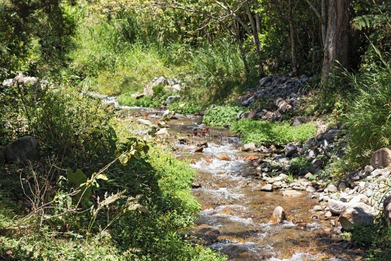 Small stream in Volcan Baru National Park Panama.  royalty free stock photo
