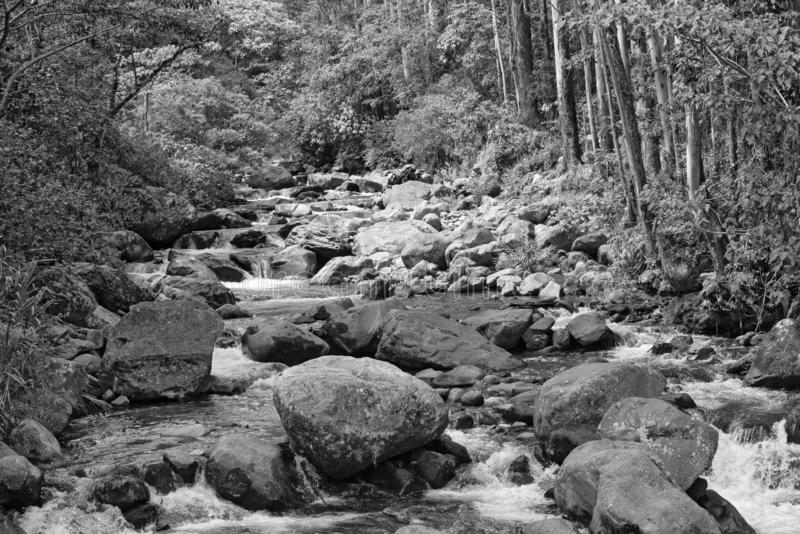 Small stream in Volcan Baru National Park Panama in black and white.  royalty free stock photos