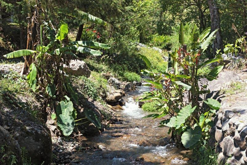 Small stream in Volcan Baru National Park Panama.  royalty free stock image