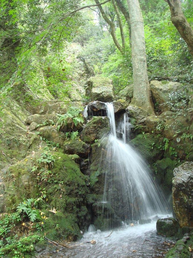 Small stream water fall stock photo