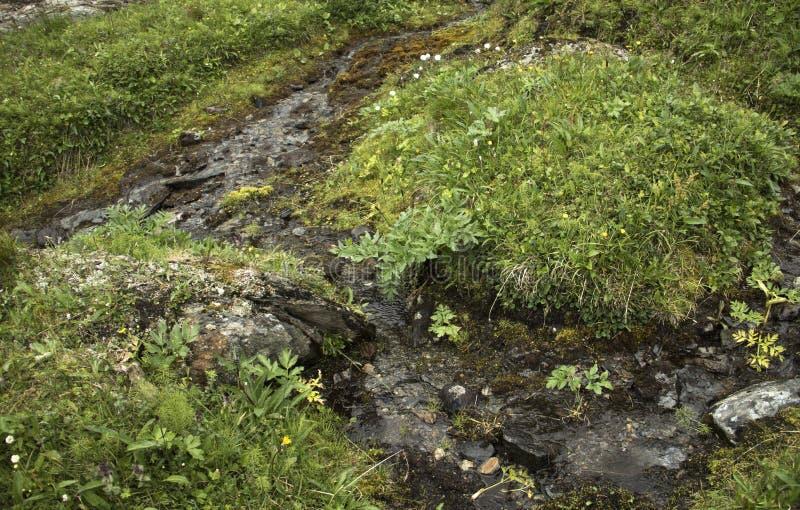 Small stream stock photo