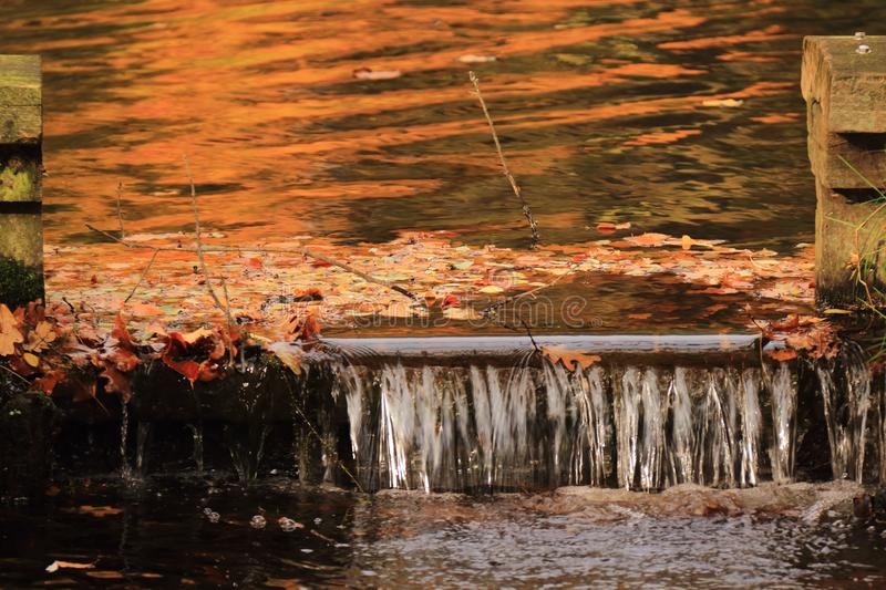 Fall autumn leaves in small water dam stock images