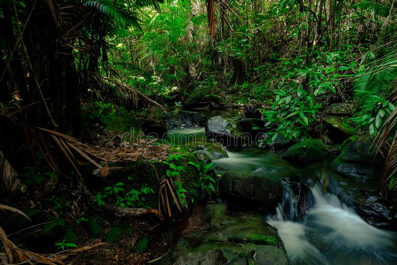 Small streams flow through abundant tropical forests in forest of Thailand,Phang Nga,Koh Yao Yai. Small streams flow through abundant tropical forests in forest royalty free stock images