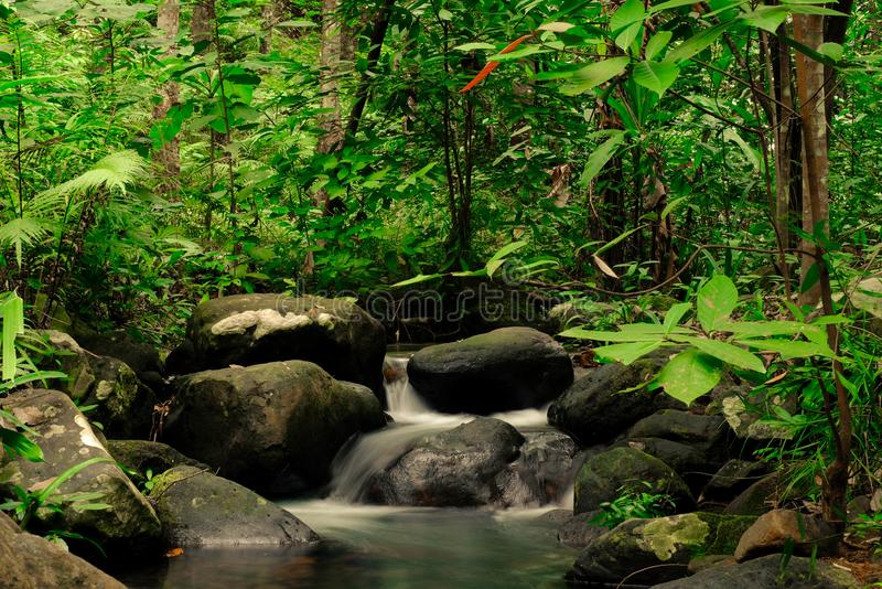 Small streams flow through abundant tropical forests in forest of Thailand,Phang Nga,Koh Yao Yai. Small streams flow through abundant tropical forests in forest royalty free stock photos