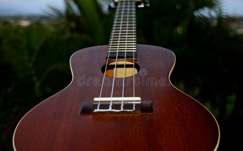 Ukulele Closeup. A small 4 stringed musical instrument that was popularized when it was introduced to Hawaii royalty free stock photos