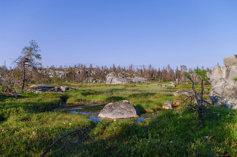 Small swamp on top of mountain Vottovaara with stones and dead t. Rees, Karelia, Russia royalty free stock photography