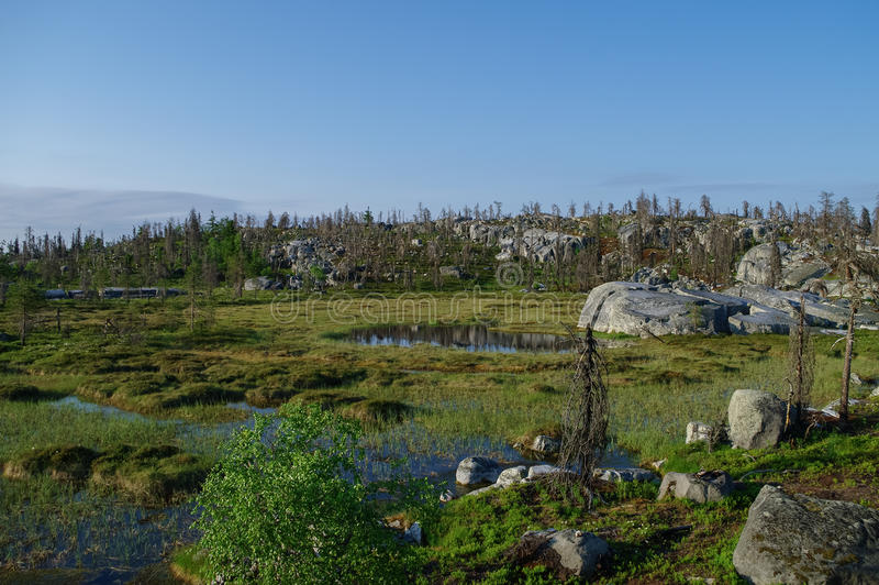 Small swamp on top of mountain Vottovaara with stones and dead t. Rees, Karelia, Russia stock photos