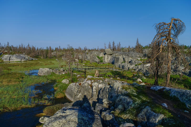 Small swamp on top of mountain Vottovaara with stones and dead t. Rees, Karelia, Russia stock photography