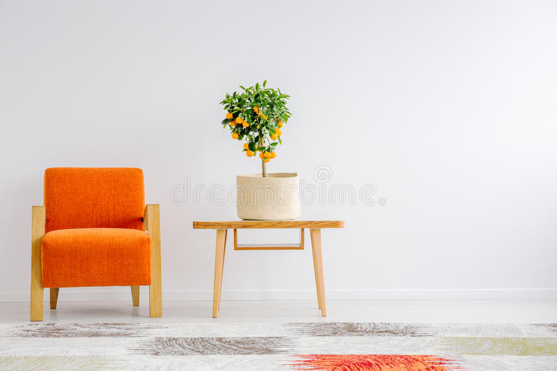 Small tangerine tree in canvas cover. On wooden table next to orange chair royalty free stock photography