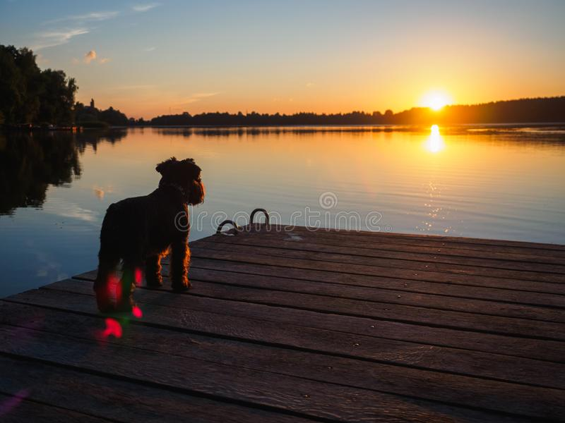 A small terrier on the bridge on the river stock image