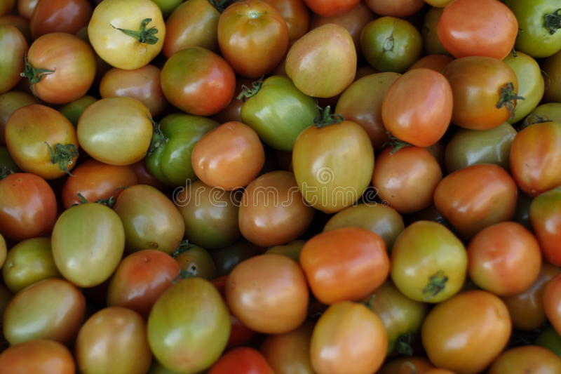 Small tomato stock photography