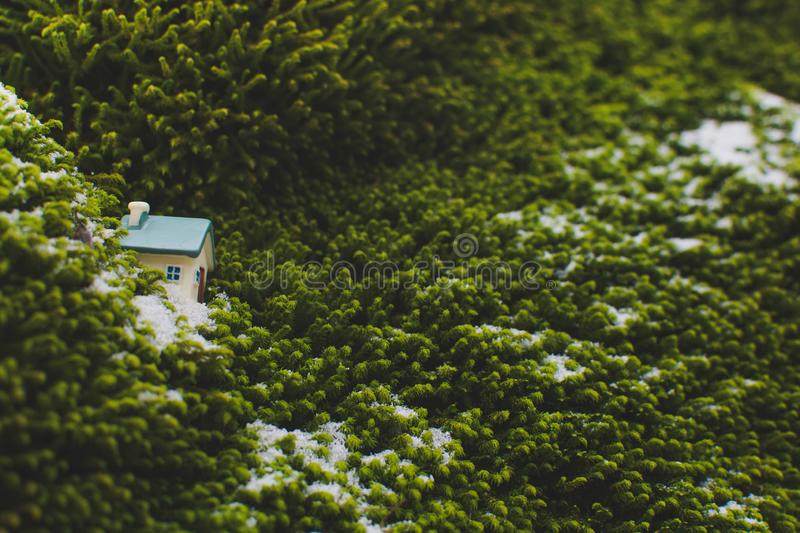 Toy house. A small toy house in green moss, home, real, estate, background, model, building, miniature, mortgage, hand, white, sale, insurance, concept stock photos