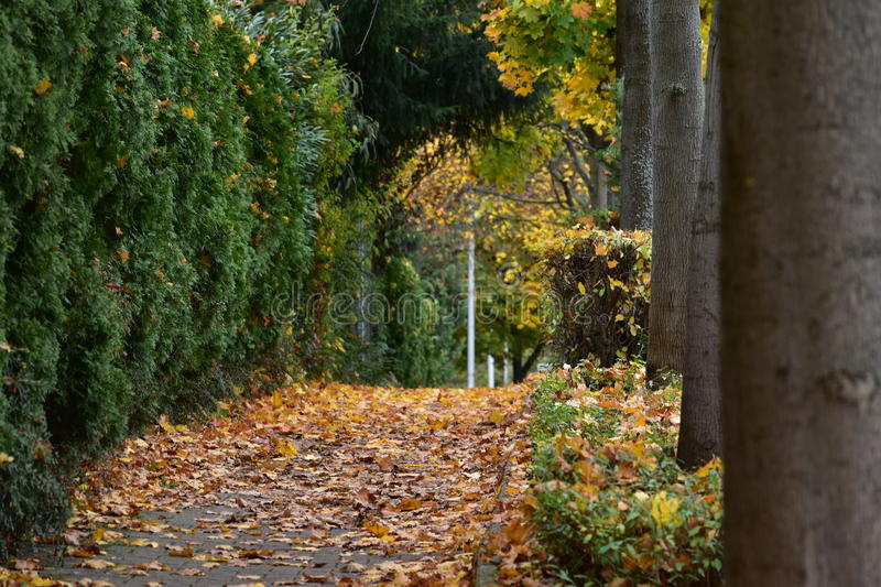 A small track in the park in autumn stock photos