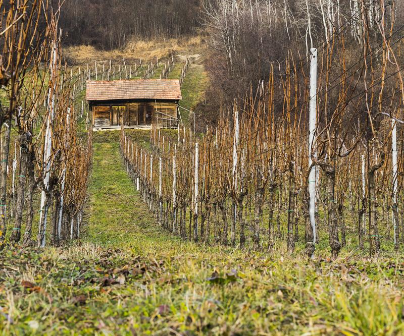 Small traditional wooden vinyard structure in Slovenia. Bistrica ob Sotli, Slovenia, EU - December 12, 2018: Small traditional wooden vinyard structure in royalty free stock photo