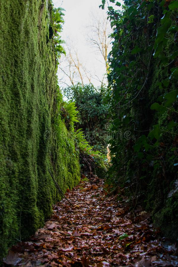 Leafy trail walls royalty free stock images