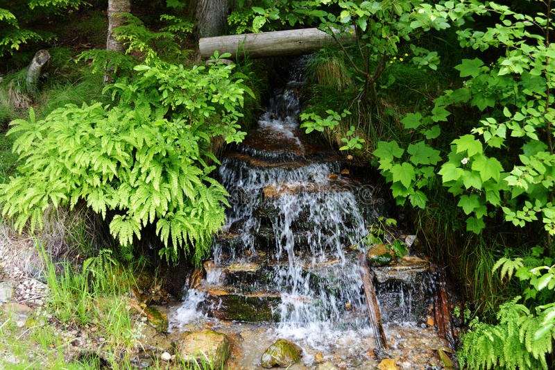 Small Tranquil Stream in Lush Green Forest stock photo