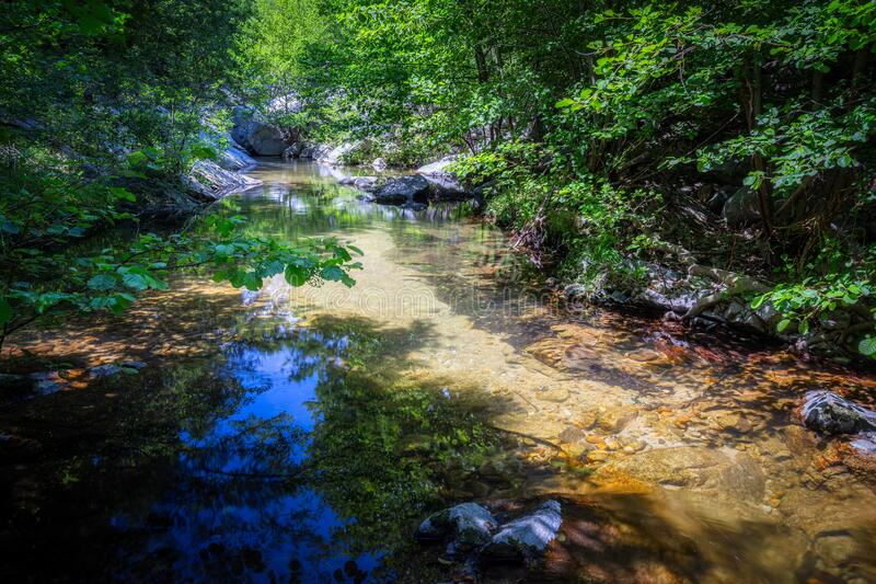 Small transparent creek in a sunny day in the forest royalty free stock image