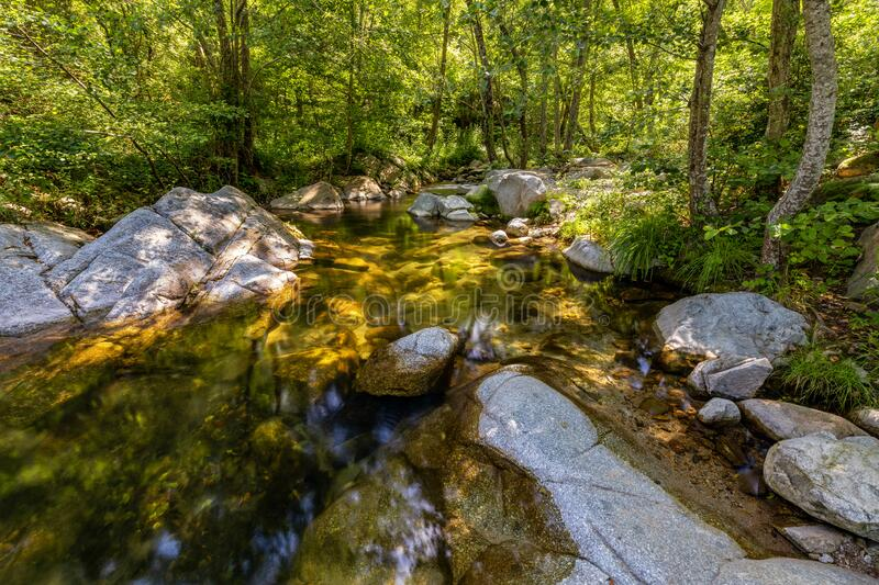 Small transparent creek in a sunny day in the forest stock images