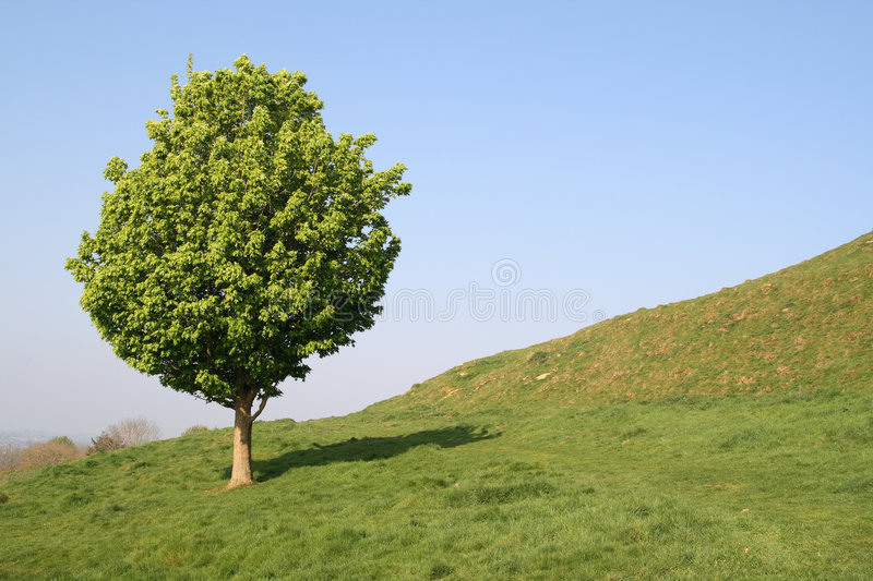 Download A Small Tree Royalty Free Stock Photo - Image: 2304155