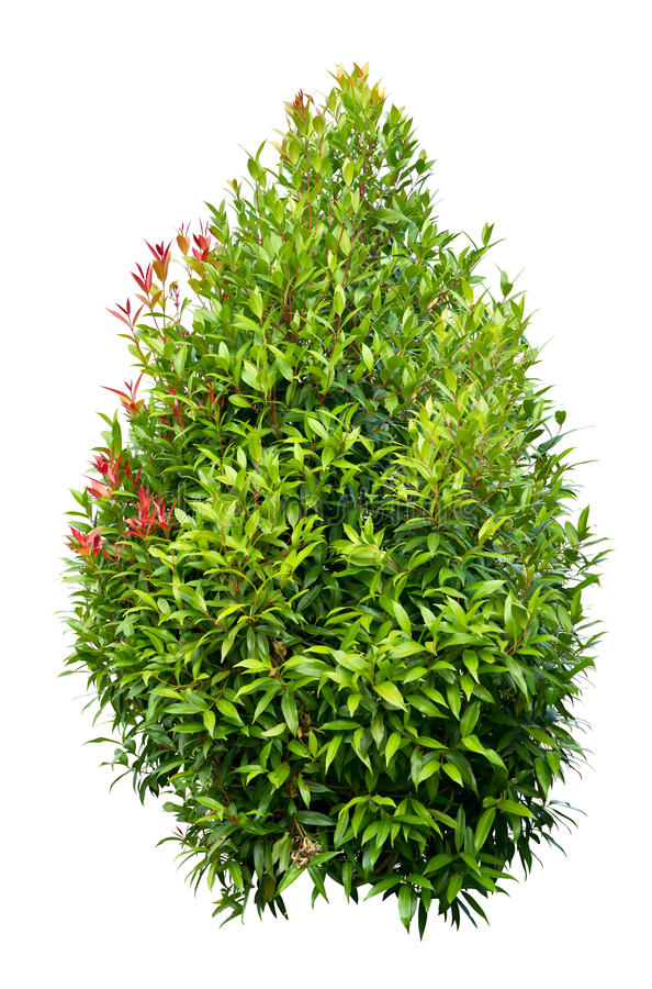 Download Small Tree stock photo. Image of botanical, background - 26654518