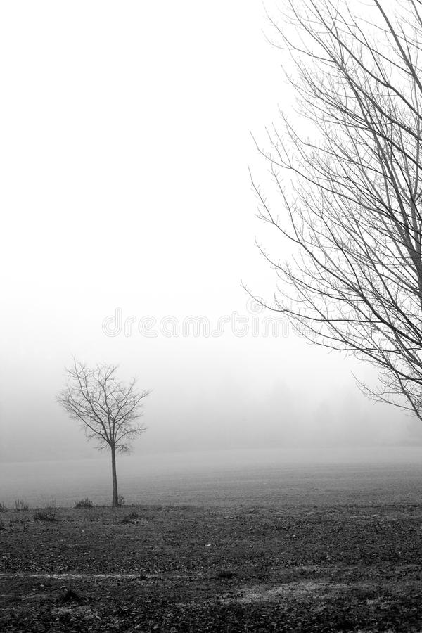 Small tree in black and white stock photos