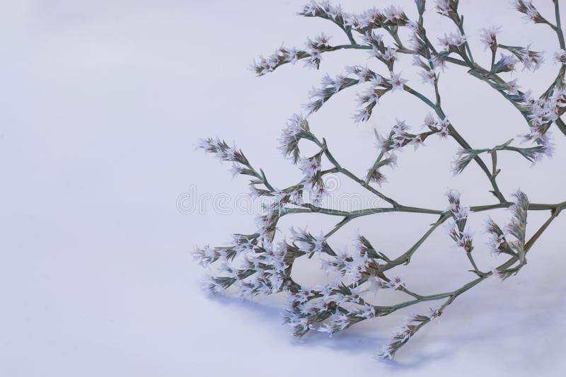 Small tree in bloom. With snowy background stock photos