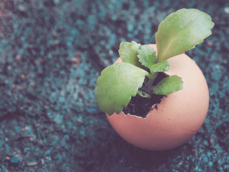 Small tree are breaking out of shell egg. Color filter, Small tree are breaking out of shell egg/ Image ideas for saving the Earth stock photo