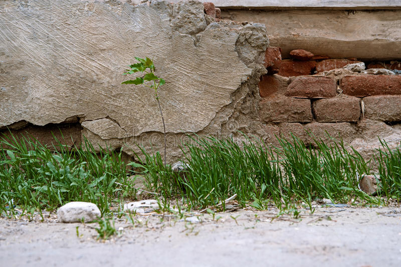 Small tree and grass growing in front of aged stone wall stock photo