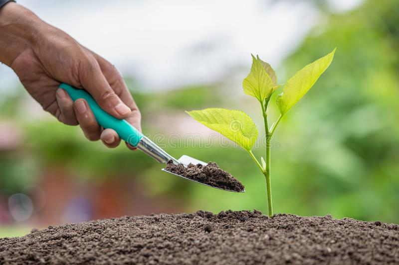 A small tree on the ground on green background, The idea of planting trees to reduce global warming, World Environment Day.  royalty free stock photography